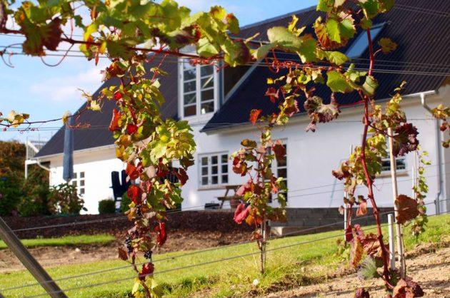 Oplev dansk vingård i Kolding