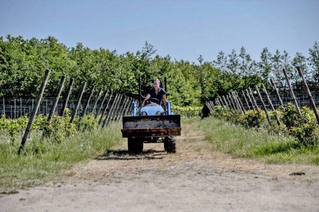Oplev dansk vingård i Hvidovre
